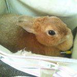 ウサギ来訪