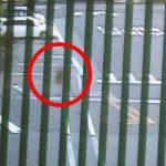 Yukaチャンが心配… & 深夜の監視カメラの映った謎の人影は…。