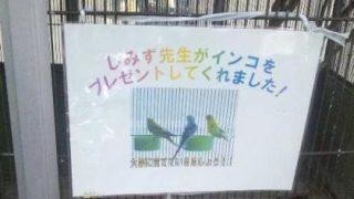 3月まで勤務していた小学校の運動会に行ってきました。