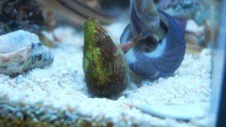貝の喧嘩。