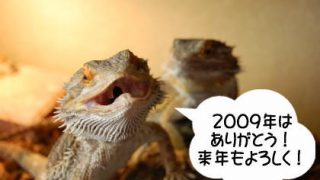 """カテゴリ別2009年総括  """"リクガメ・トカゲ・インコ"""""""