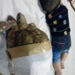 乳児vsヒョウモンガメ